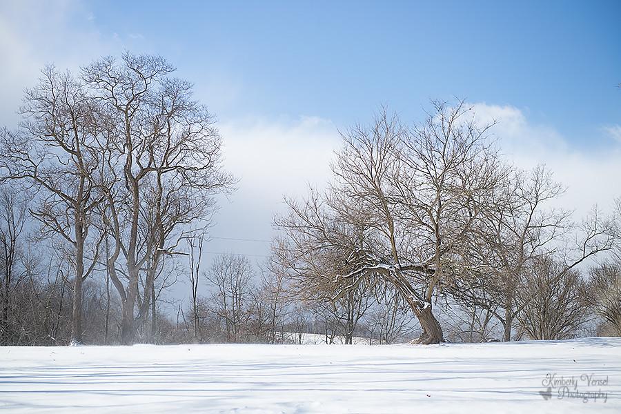 January 8: Landscape