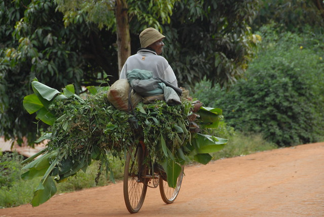 Fodder on a bike, Ubiri village, Lushoto