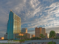 Tampa Skyline in The Morning