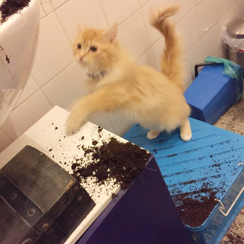 An unknown ginger kitten knocks over Human's Aloe Vera