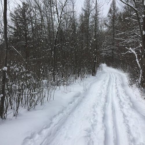 Quiet ski trail, Ottawa