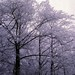 West Germany   -   Vaihingen   -   Patch Barracks   -   Frost Trees    -   January 1987 by Ladycliff