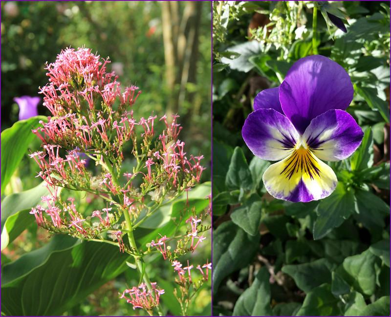 Flowers, Pisac