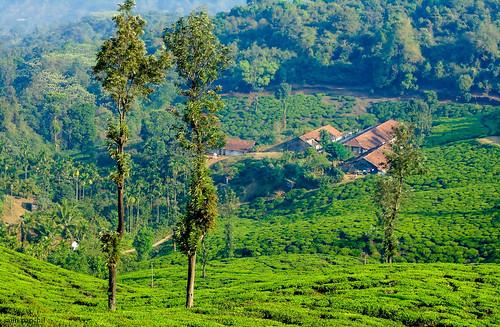 india tourism nature kerala hills greenery chembra wayanad teaestate godsowncountry wayanadtourism