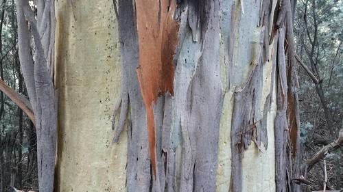 Tree-up