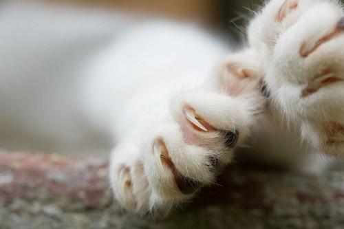 tentang kucing