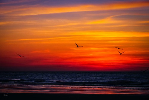 sunset color birds seaside