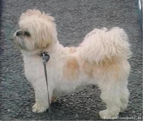 [Reunited] Thu, Aug 25th, 2016 Lost Male Dog - Ballinmoney, Bailieborough, Cavan
