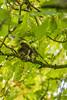 Autumnal Squirrels 3
