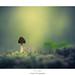 Flou sentimental by Naska Photographie