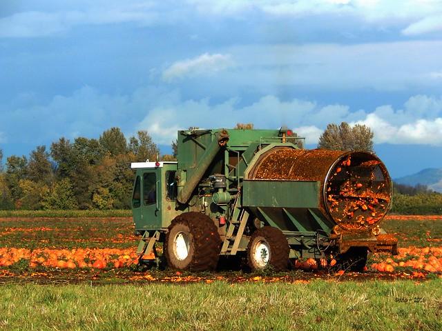 Serious Pumpkin Seed Harvester ~ Closer In