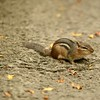 #chipmunk #fall #leaves #wildlifephotography #cuteanimals