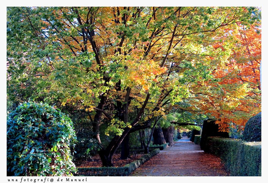 una tarde de noviembre en el jardín botánico de Madrid-022
