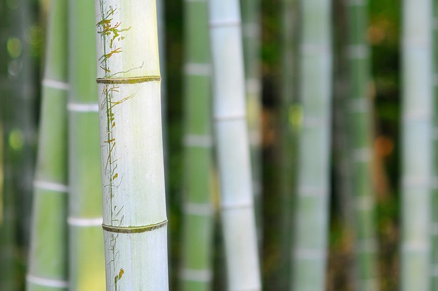 Scratched bamboo