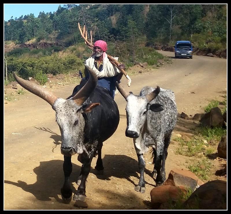 gosh I love those horns