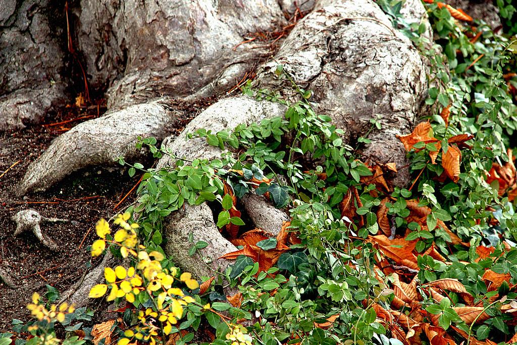 otoño, también, por los suelos