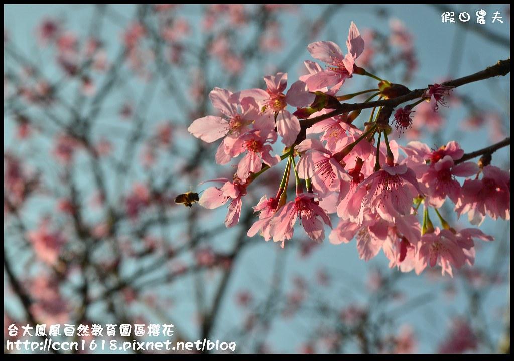 台大鳳凰自然教育園區櫻花DSC_5938