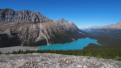 Peyto Lake from Bow Summit Lookout