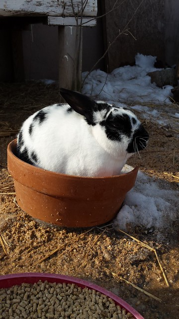 Potted Bunny