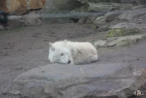Zoo Berlin 11.01.2015 53