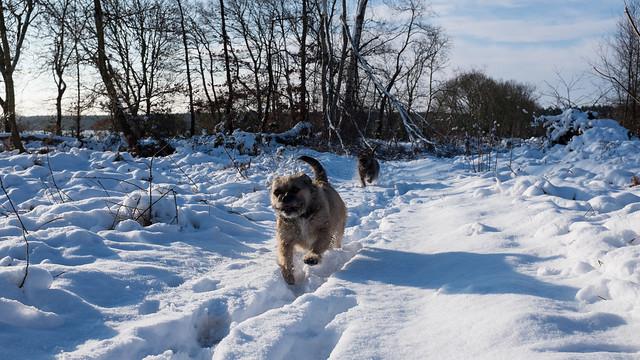 Dog License Sherwood Park