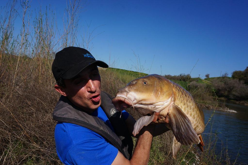 Large carp for Sac bee fishing report