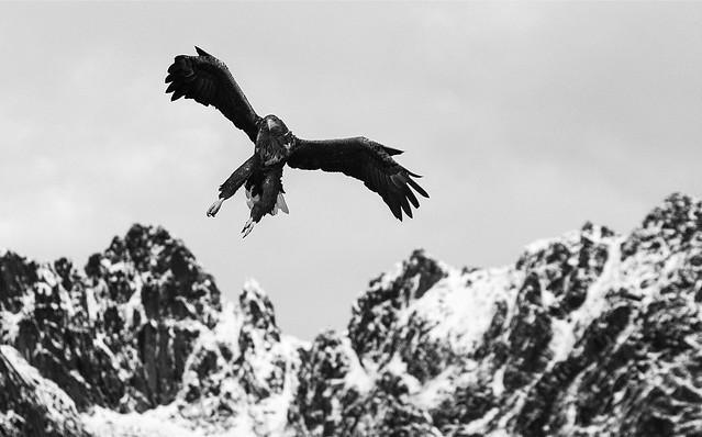 The Eagle Show