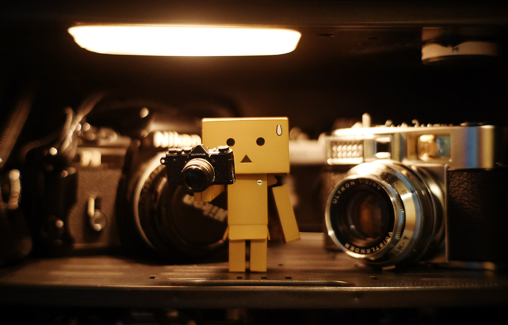 Danbo with cameras