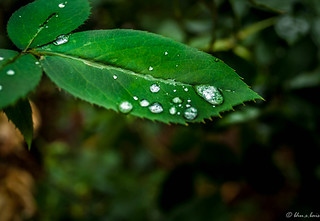 Holding pearl after rain.....