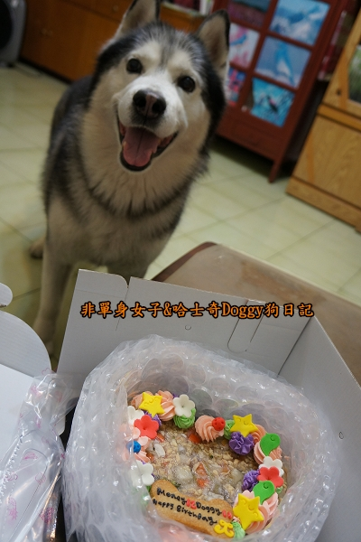 吉快樂寵物蛋糕01