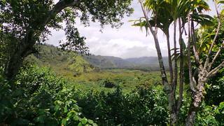 Overlook Palmen