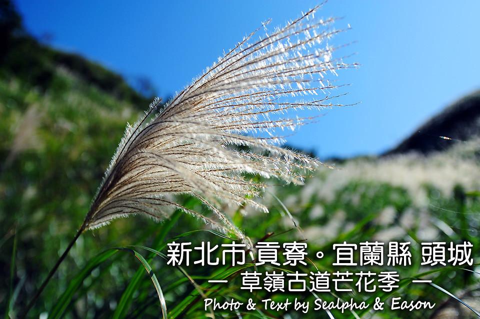 草嶺古道芒花季