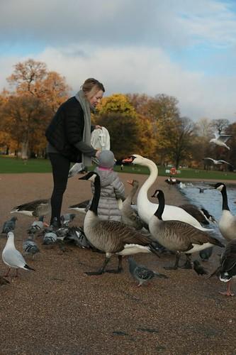 "Regent's park: animali del ""round pound"""