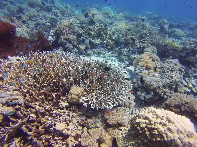 Panjang Reef | Moyo Island