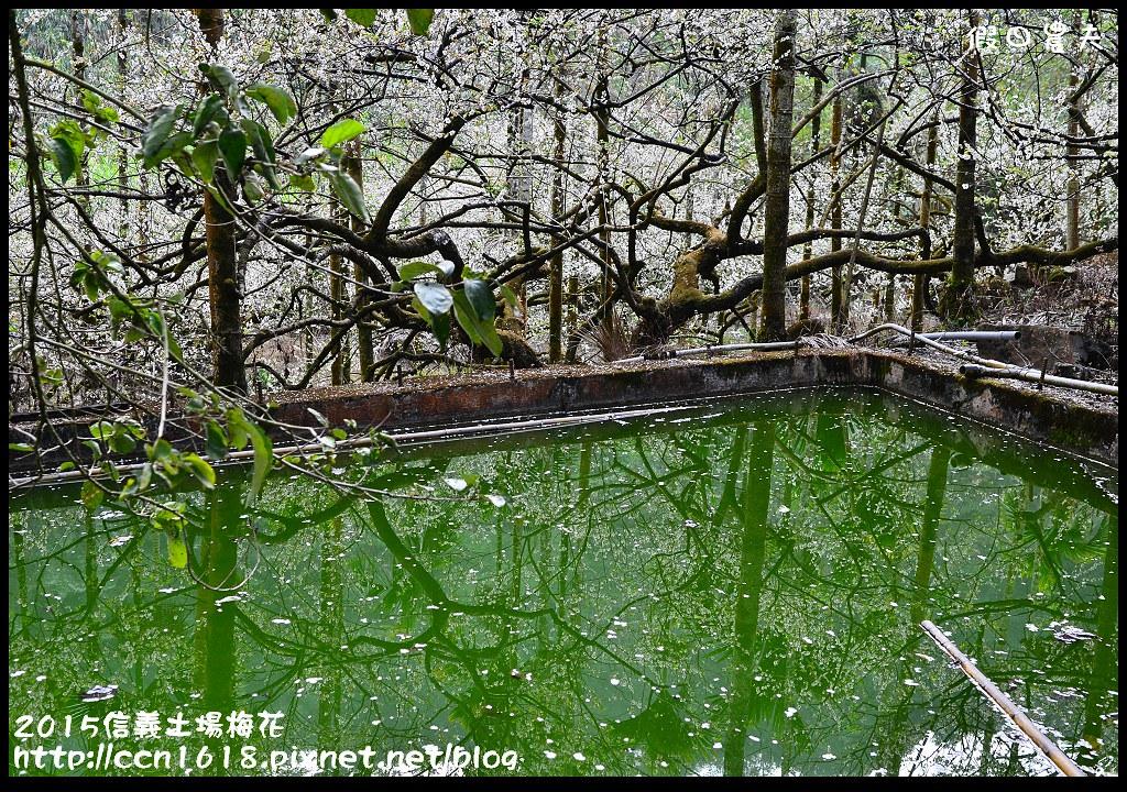 2015信義土場梅花DSC_9267