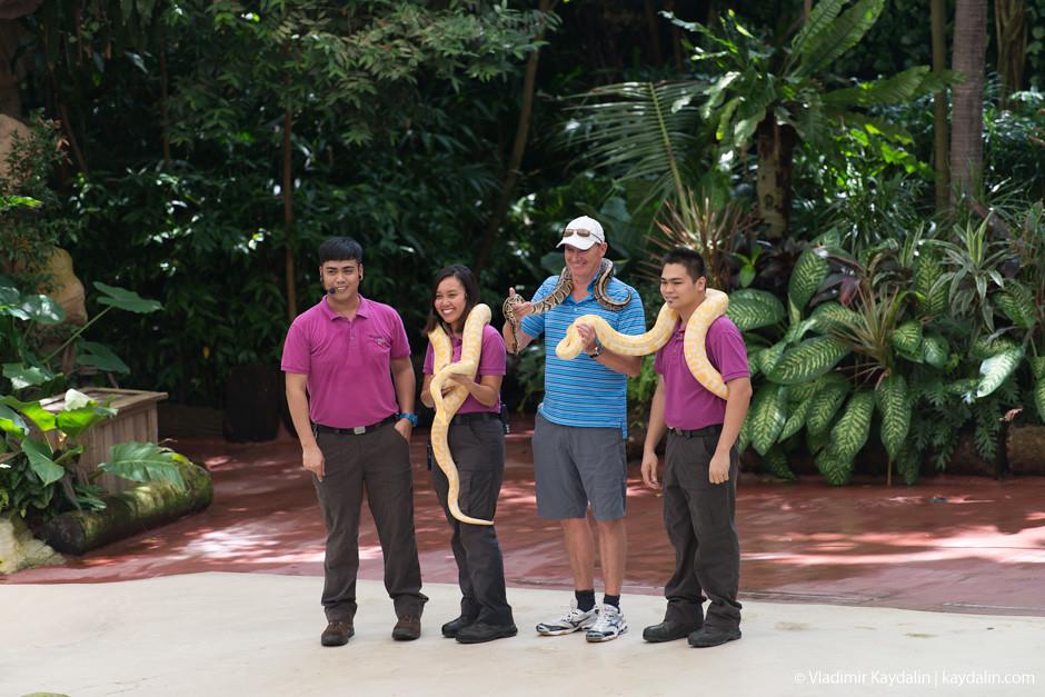 Шимпанзе, зоопарк Сингапура