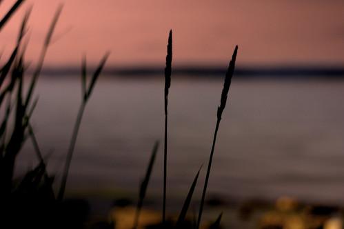 light sunset color night dawn twilight soft sweden sony norrköping sonynex konicahexagon5017