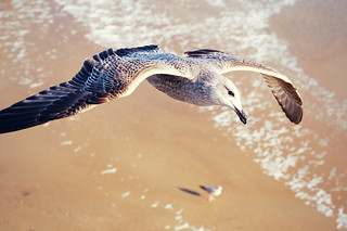 soaring on the wings....