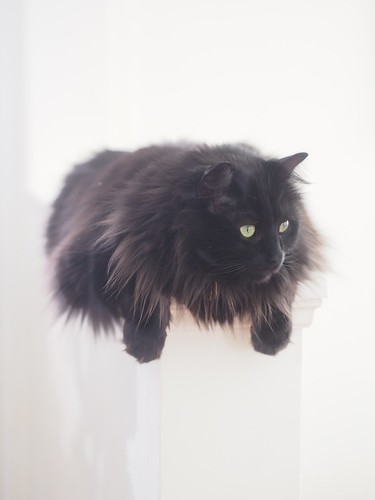 floating cat