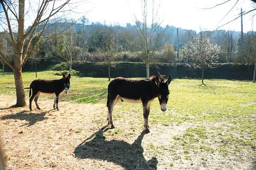 Parco dei Mostri: asinelli