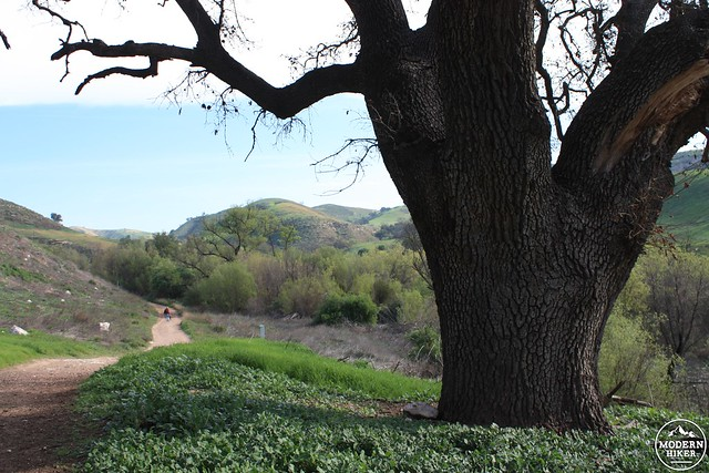 las virgenes canyon 6