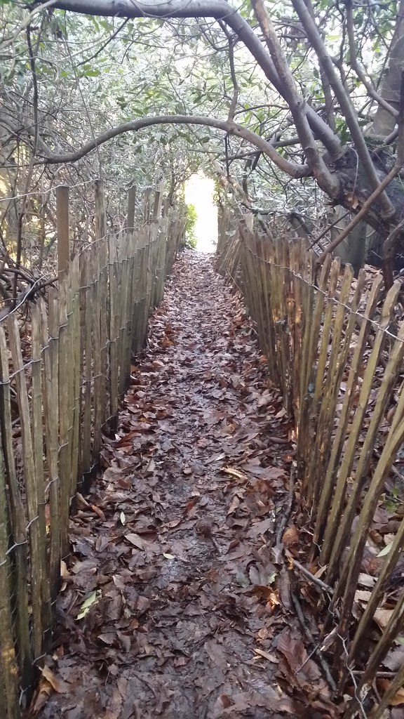 This path's like a secret tunnel #Wealdway #sh