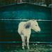Pony by tagesform