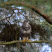 Common Buzzard. by spw6156 - Over 3,959,125 Views