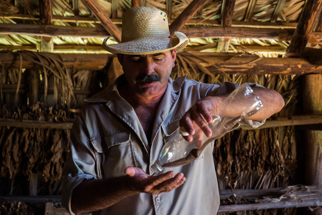 Tobacco farmer showing off his seeds on the  farm (finca) in Vinales, Cuba.jpg