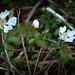 Flowers i the shadows by Valerie Everett