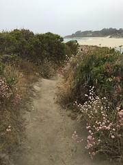 Pathway in Carmel Meadows/Carmel River Beach in the distance