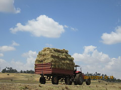 Hay bailed and ready for transport in west shoa zone, Oromia (Photo:ILRI\Abule Ebro)