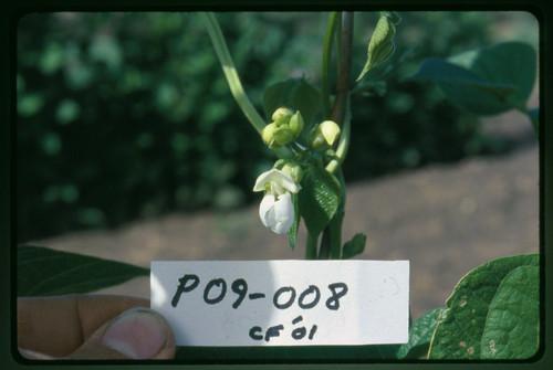 P09-008 CF01 Fl