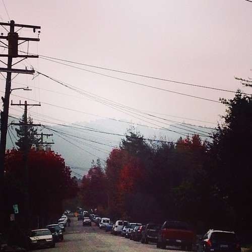 Happy Wednesday!#beautifulberkeley #leaves #fog #love